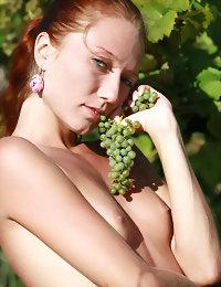 Grapeyard